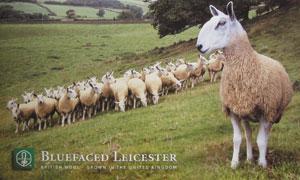 ull från Blue Faced Leicester och andra lantraser