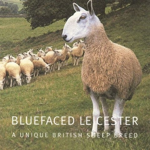 Aran bluefaced Leicester. Tjockt  Mjukt engelskt garn från west yorkshire spinners